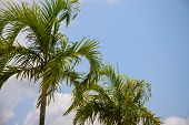 Cloudy Blue Sky And Coco Palm Tree. Tropical Vacation Destination Place. Exotic Island Holiday. Trop poster
