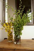 Green Tree Branches And Forsythia Branches With Yellow Flowers  In Entryway.  Bouquets Of Spring Bra poster