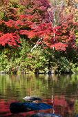 Japanese fall foliage