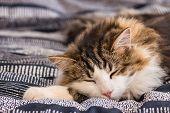 Close-up Of Tabby Cat Sleeping On Blue Duvet poster