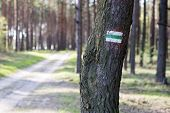 Marking Tourist Routes On A Tree In The Forest. Trees With Signs For Use In The Field. poster