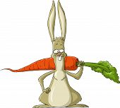 image of cony  - Rabbit on a white background vector illustration - JPG