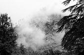 Nebel nach Regen im wilden Wald