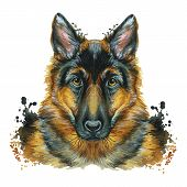 Watercolor Printshop, Print On The Theme Of The Breed Of Dogs, Mammals, Animals, Breed German Shephe poster