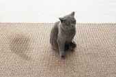 Cute Cat On Carpet Near Wet Spot poster