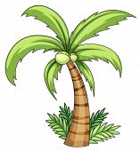 Illustration of isolated palm on white - EPS VECTOR format also available in my portfolio.
