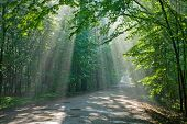 Old Deciduous Forest With Beams Of Light Entering