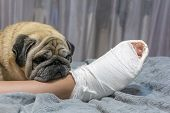 The Pug Laid His Head On The Owner's Foot. Human Foot In A Cast. The Dog Shows Pity And Compassion. poster