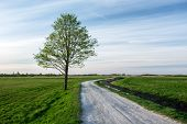 Rural Road Through Green Meadows And Lonely Big Tree - View In The Spring Day poster