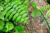 Closeup Beautiful  Nature View Of Green Leaf On Blurred Greenery Background In Garden With Copy Spac poster