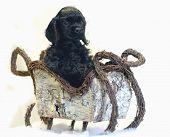 Black Spaniel Puppy In Sleigh