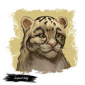 Leopard Babby Tabby Watercolor Portrait Of Exotic Animal. Panther Looking Aside. Felidae Family Memb poster