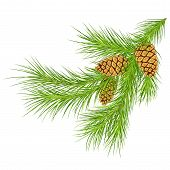Christmas Decoration Pine Cone  And Fir Tree Branches .eps 10 Fir Branch. Christmas Tree Branches Wi poster