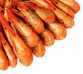 Shrimp Isolated On White Background. Cooked Prawns Or Tiger Shrimps. Seafood. poster