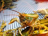 Whiskers And Claws Of Green Live Crayfish In Fish Shop Showcase With Water poster