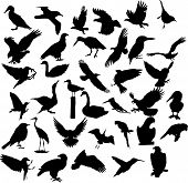 picture of flock seagulls  - bird silhouette animal crow - JPG