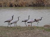 6 cranes