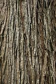 Background Of Bark Tree