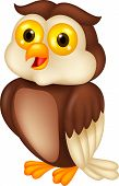 Cute owl bird cartoon