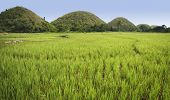 stock photo of chocolate hills  - lush green rice fields surrounding the chocolate hills of bohol island in the philippines - JPG