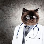 Funny fluffy cat doctor in a robe