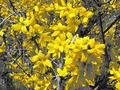Fotografía de primer plano flor amarillo flores en árbol