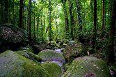 The Rainforrest Queensland, Australia