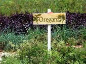 Oregano Herb Garden Sign