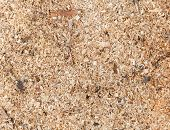 Sawdust Detailed Photo Background Texture