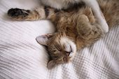Relaxed Sleeping Cat