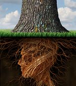 stock photo of foundation  - Take root and taking roots business and health care concept with underground tree roots in the shape of a human head as a tall tree grows above as an icon of growth and success in health care and wealth - JPG