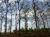 Teak-Bäume
