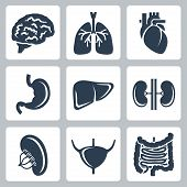 pic of bladder  - Vector internal organs icons set over white - JPG