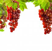 Pieces of pink wine grapes on white background