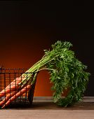 Fresh picked carrots in a wire basket with a light to dark warm background. The carrot tops hang ove