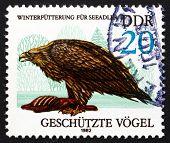 Postage Stamp Gdr 1982 Sea Eagle, Bird Of Prey
