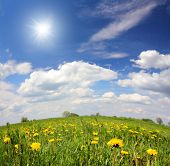spring landscape with dandelion flowers under blue sky