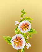 picture of hollyhock  - Hollyhock flowers - JPG