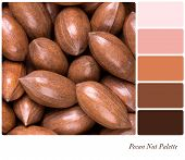 A background of pecan nuts in a colour palette with complimentary colour swatches