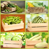 Collage of  vegetables in wooden boxes