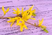 Blooming tree branch with yellow flowers on wooden background