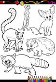 Wild Animals Set For Coloring Book