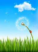 Nature background with a dandelion and a ladybug.  Raster version