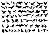 stock photo of animal footprint  - As a variety of vector silhouettes of birds - JPG