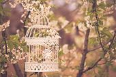 picture of caged  - Bird cage on the cherry blossom tree in sunset - JPG