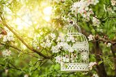 stock photo of caged  - Bird cage on the apple blossom tree in sunset - JPG
