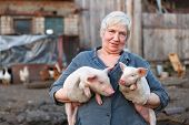 stock photo of animal husbandry  - Adult woman keep in the hands of two little pigs. animal husbandry