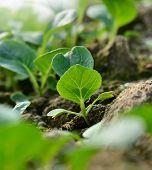 vegetable seeding