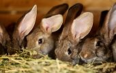 Young rabbit animal farm and breeding.
