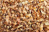 Dry Linden Leaves